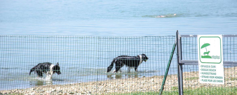 Hondenstrand- Pet Friendly